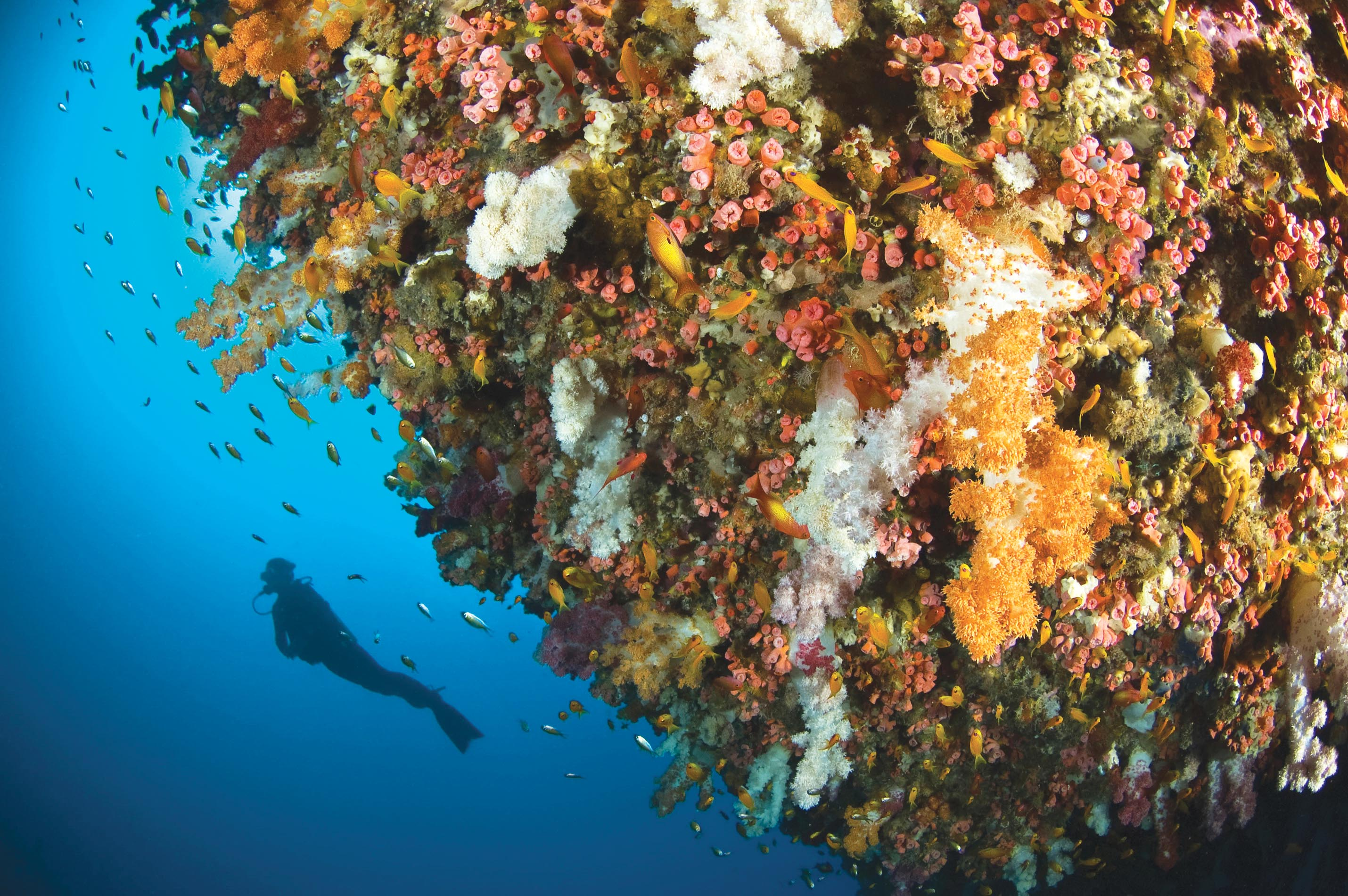 Diving the coral reefs of the southern hemisphere for stunning underwater wildlife