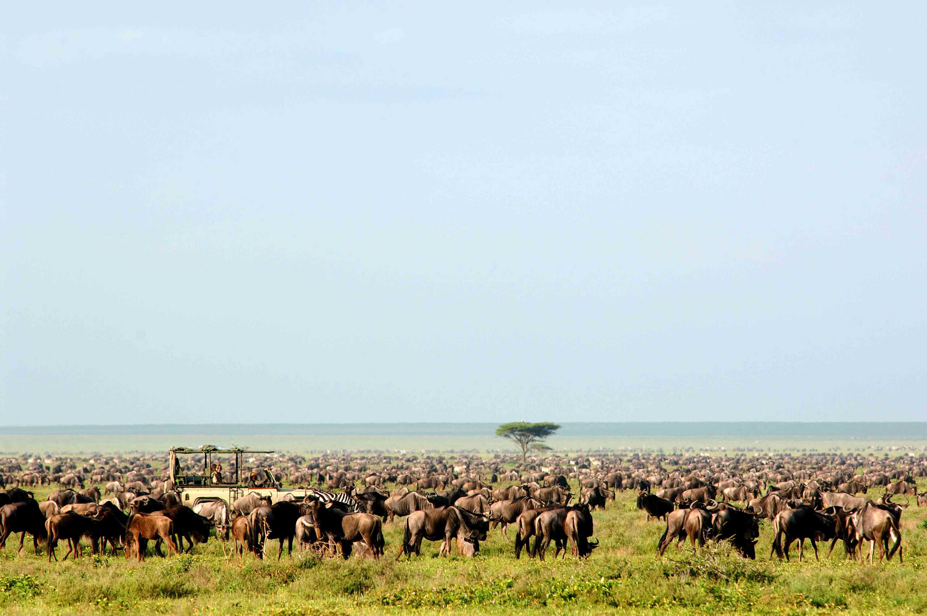 Buffaloes Safari trip Serengeti Tanzania bespoke holiday