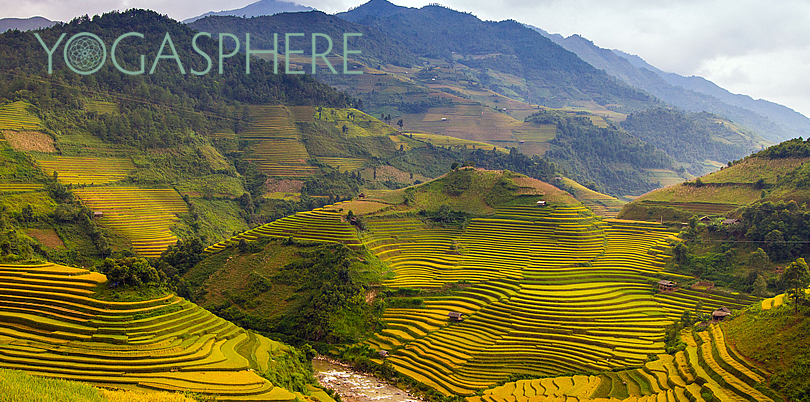 Vietnam rice paddy terraces serene landscape perfect for yoga