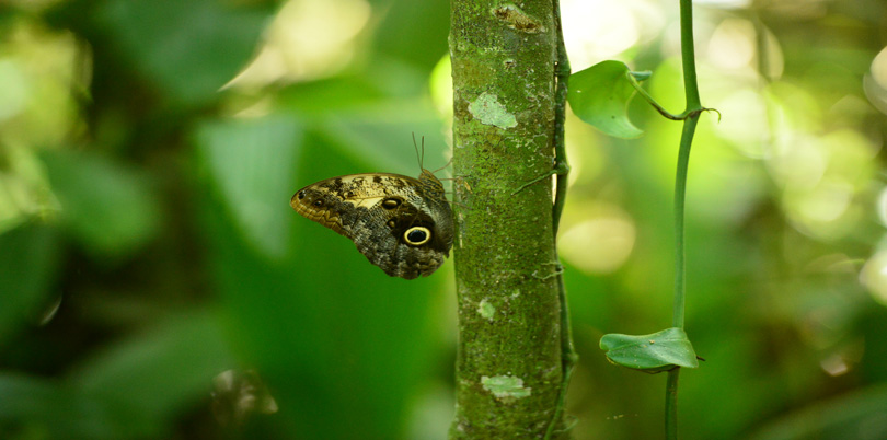 Butterfly on branch in the jungle
