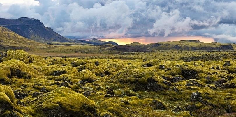 Lava moss, Iceland