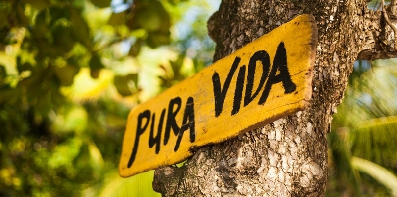 Pura Vida sign on a tree in Costa Rica