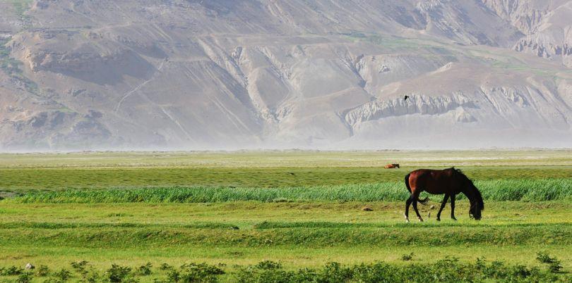 Horses in Wakhan Corridor, in Afghanistan