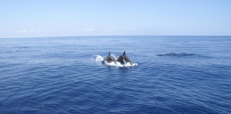 Dolphin Tour in Costa Rica
