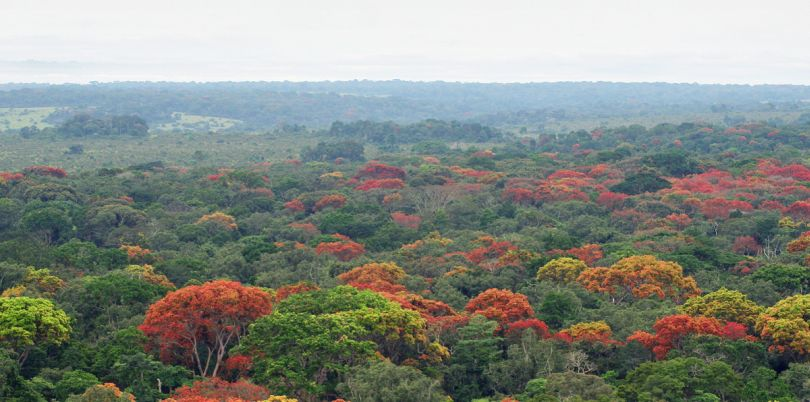 Colourful tree tops in the Democratic Republic of Congo