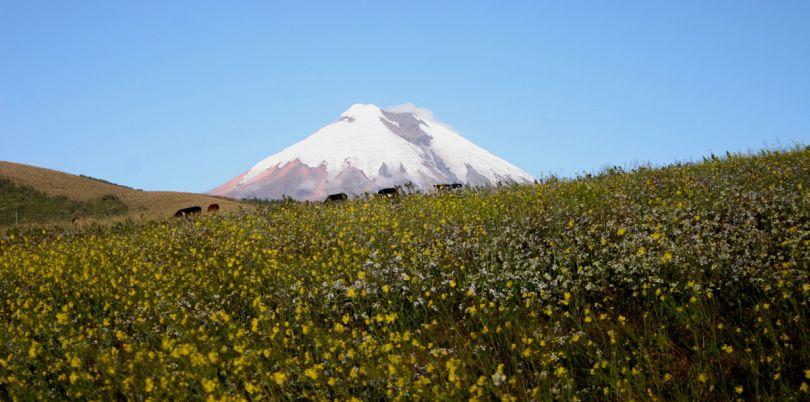 Fields in the shadow of a snowy mountain landscape in Ecuador
