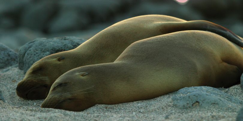 Sleeping Sealions, Galapagos Islands, Ecuador
