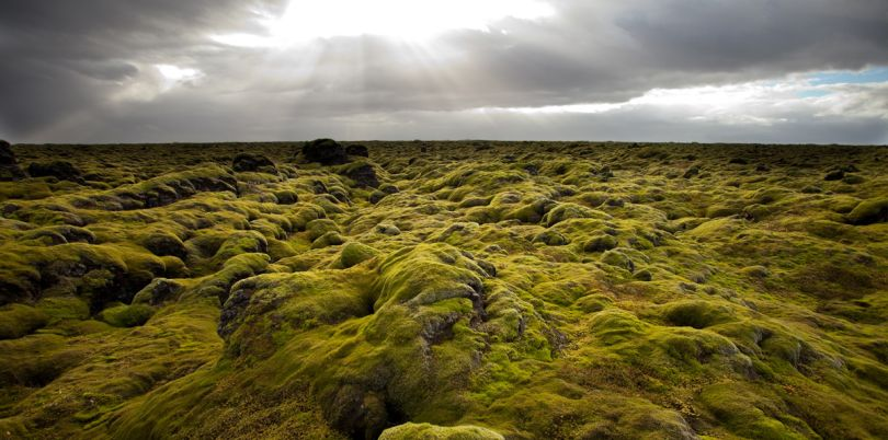 Green marshy lands of Iceland