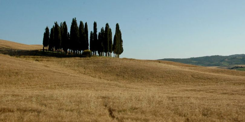 Trees on a hill in Tuscany Italy