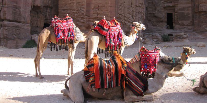 Camels in a temple, Jordan