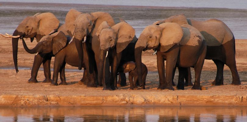 Bathing elephants at a watering hole, Malawi