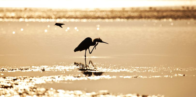 Silouette of a bird, Mozambique