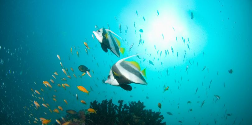 Diving with Benguerra Lodge in Mozambique