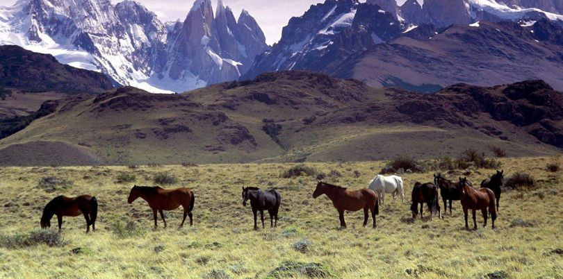 Horses in front of mountains in El Chalten Patagonia