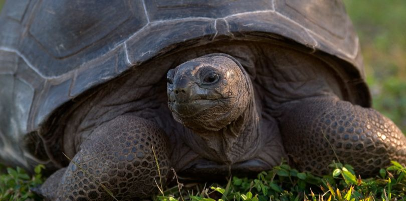 Tortoise in the Seychelles