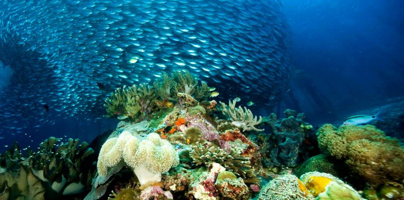 Magic underwater world stunning coral reefs at the Solomon Islands