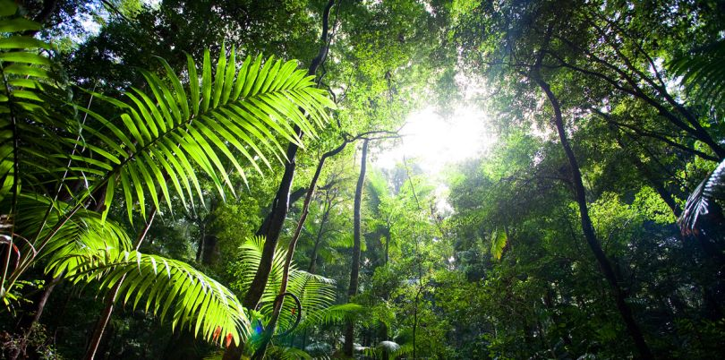 Sunshine through the trees of the jungle on Solomon Islands