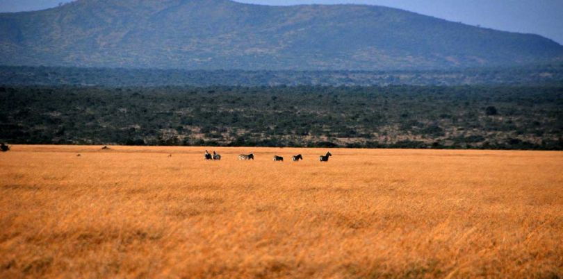 Zebras on the horizon in South Sudan