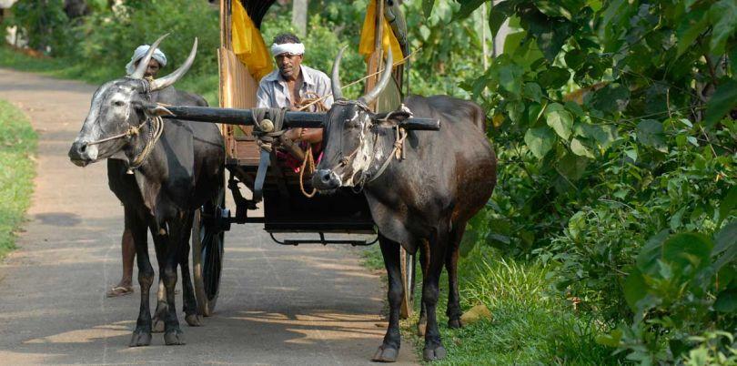 On the way to the market, Sri Lanka