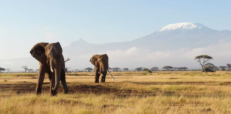 Elephants in front of Kilimanjaro Tanzania