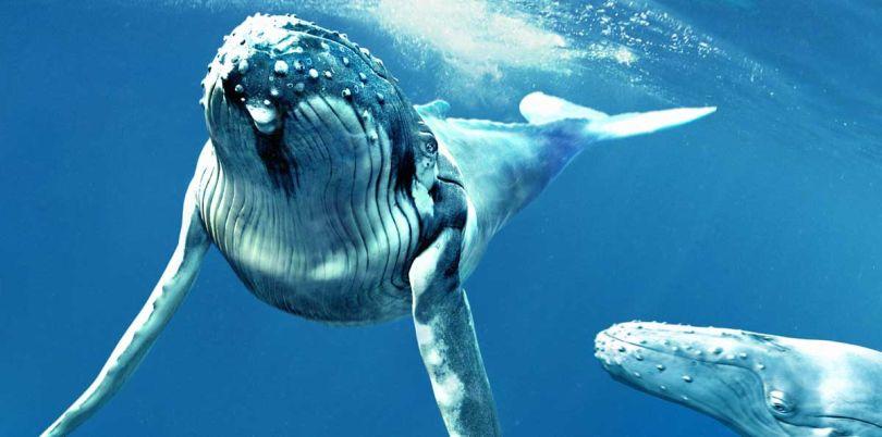 Whale, USA